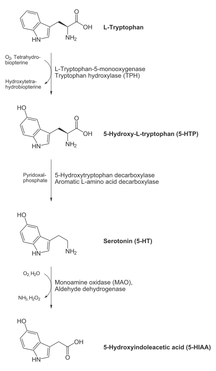 Biosynthesis of serotonin (5-hydroxytryptamine, 5-HT)
